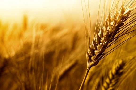 سیل چه تاثیری در میزان تولید گندم کشور گذاشت؟