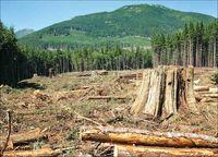تلاش جهانی برای نجات جنگلها