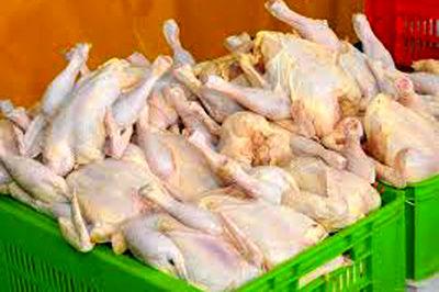 آخرین وضعیت صادرات مرغ