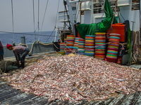 خسارتهای پیدا و پنهان صیادان چینی به آبهای جنوب کشور