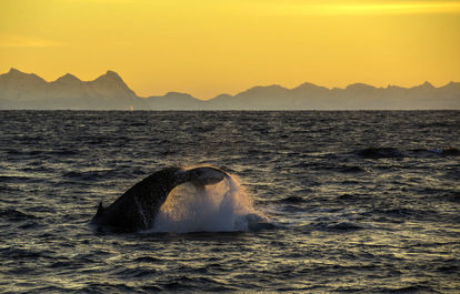 والهای دریایی به روایت تصویر