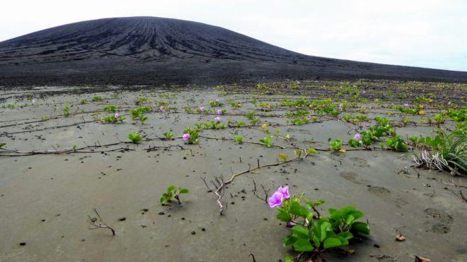 زیستگاه گلهای صورتی و جغد؛ جزیره جدیدی که سر از آب در آورد