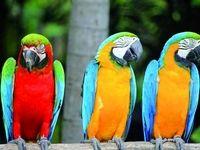 صنعت بیمه کسب درآمد از پرورش دهندگان پرندگان زینتی را فراموش کرد!