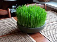 سبزه هفتسین و ارزش آن از منظر تغذیه