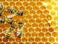 تولید عسل تقلبی بدون دخالت زنبور عسل! +فیلم