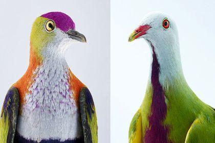 عکاسی از خاصترین پرندگان جهان +تصاویر