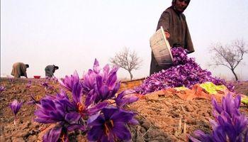 ایران مرجع قیمتگذاری زعفران میشود؟