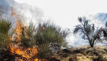 آتش سوزی در مراتع سیرجان +تصاویر