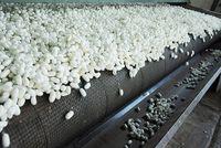 افزایش 1.5برابری قیمت پیله ابریشم در سالجاری
