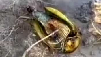 وجود فسیل زنده در تالاب «آق گل» ملایر تأیید شد