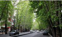 خطر سقوط درختان خشک شده خیابان ولیعصر
