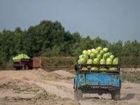 لغو ممنوعیت واردات محصولات کشاورزی از سوی دولت عراق