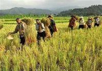 جزئیات مزد کارگران در بخش کشاورزی