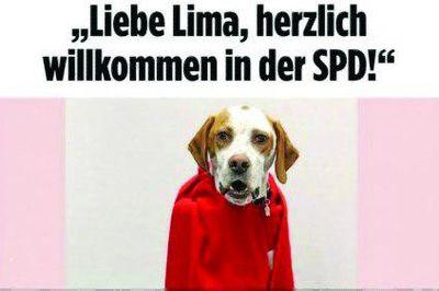 سگی در حزب سوسیالدمکرات آلمان
