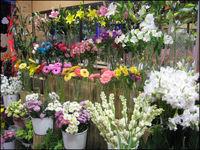 افزایش 70درصدی قیمت گل رز در آستانه روز مادر/ گلهای کم عمر سردخانهای در راه بازار