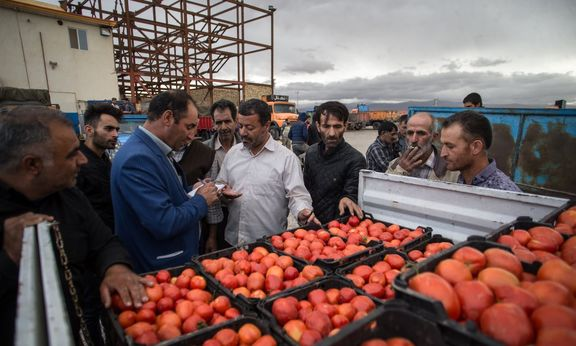 مجوز صادرات 15درصد گوجه فرنگی بزودی ابلاغ میشود
