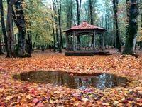 طبیعت زیبای پارک جنگلی گیسوم +تصاویر