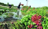 دلیل افزایش قیمت سبزی بررسی شد