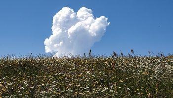 دشت « گلهای بابونه» اردبیل +تصاویر