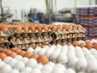 ضوابط واردات تخم مرغ در سال ۹۷ اعلام شد