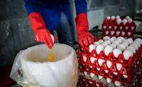 عرضه تخممرغ تنظیم بازاری در تهران