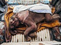زندگی دوباره بچه فیل در عکس روز نشنال جئوگرافیک