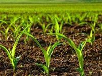 مجازات انتقال خاک به خارج از کشور مشخص شد