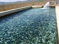 پیشبینی یک میلیون دلار ارزآوری از صادرات ماهی