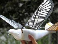 کبوتر جاسوس چینی روی سر مردم +عکس