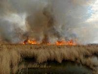 آیا آتشسوزی هورالعظیم عمدی است؟