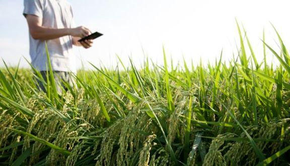 گرسنگی اقشار آسیبپذیر و کشاورزان خردهپا