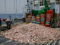 کشتیهای غیرچینی هم میکتوفیده صید میکنند
