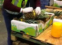 کشف محموله کوکائین جاساز شده در آناناس