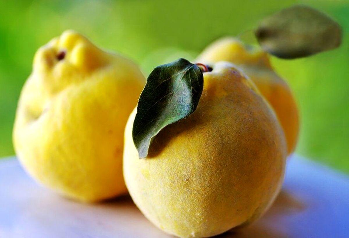 با خوردن این میوه به راحتی لاغر شوید +عکس