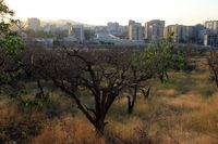 خشکاندن باغهای شهر ارومیه با هدف تغییر کاربری +تصاویر