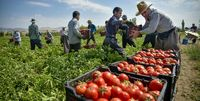 واردات سیب و گوجه فرنگی از آذربایجان به روسیه ممنوع شد
