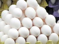 تاثیر لغو عوارض صادرات تخممرغ