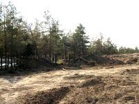 تخریب جنگلهای نهارخوران آغاز شد