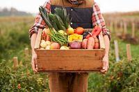 تاثیر میوهها و سبزیجات در پیشگیری از سرطان روده