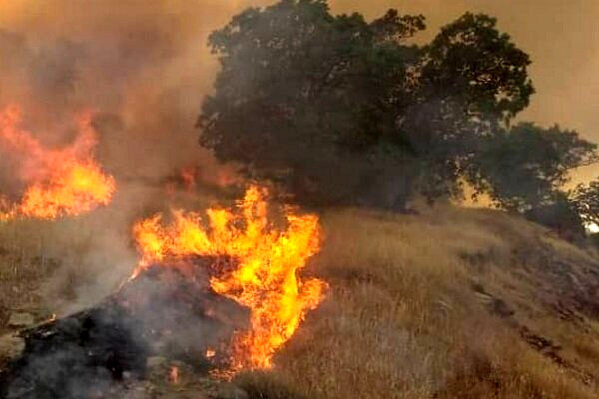 وقوع آتش سوزی گسترده در جنگل های بوزین و مرهخیل پاوه
