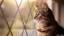 حرکت غیرقابل باور یک گربه! +فیلم