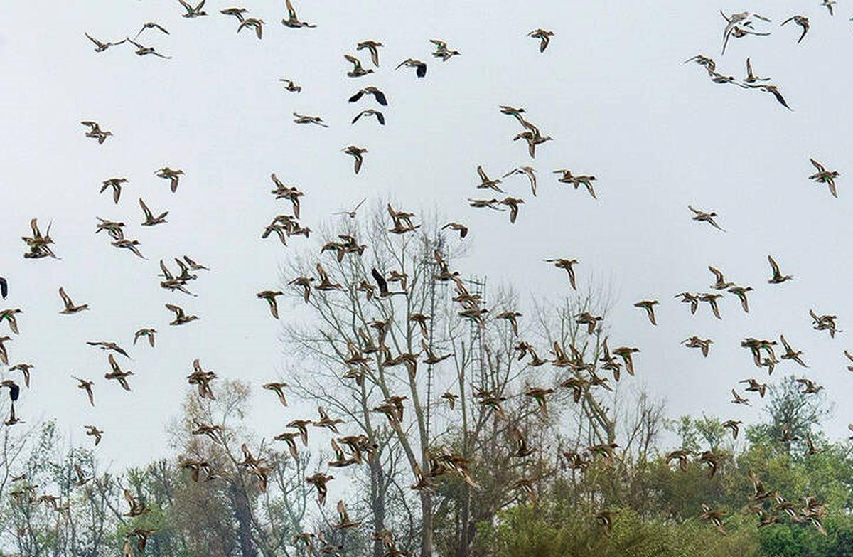 خطر ابتلا به آنفلوآنزای پرندگان جدی است؟