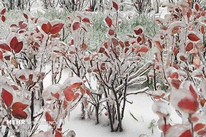 شرق روسیه یخ زد +عکس