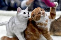 خوردن سگ و گربه در چین ممنوع میشود؟