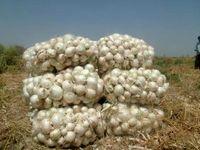 قیمت گوجهفرنگی و پیاز با ورود محصولات جنوب کشور کم شد