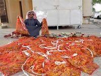 بازار داغ خرید و فروش ملخ در عربستان +فیلم