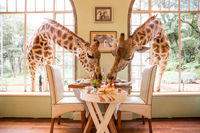 هتل زرافه آفریقا را دیدهاید؟ +تصاویر