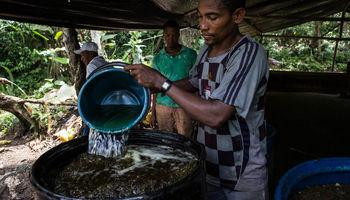 کشت غیرقانونی کوکائین در کلمبیا +تصاویر