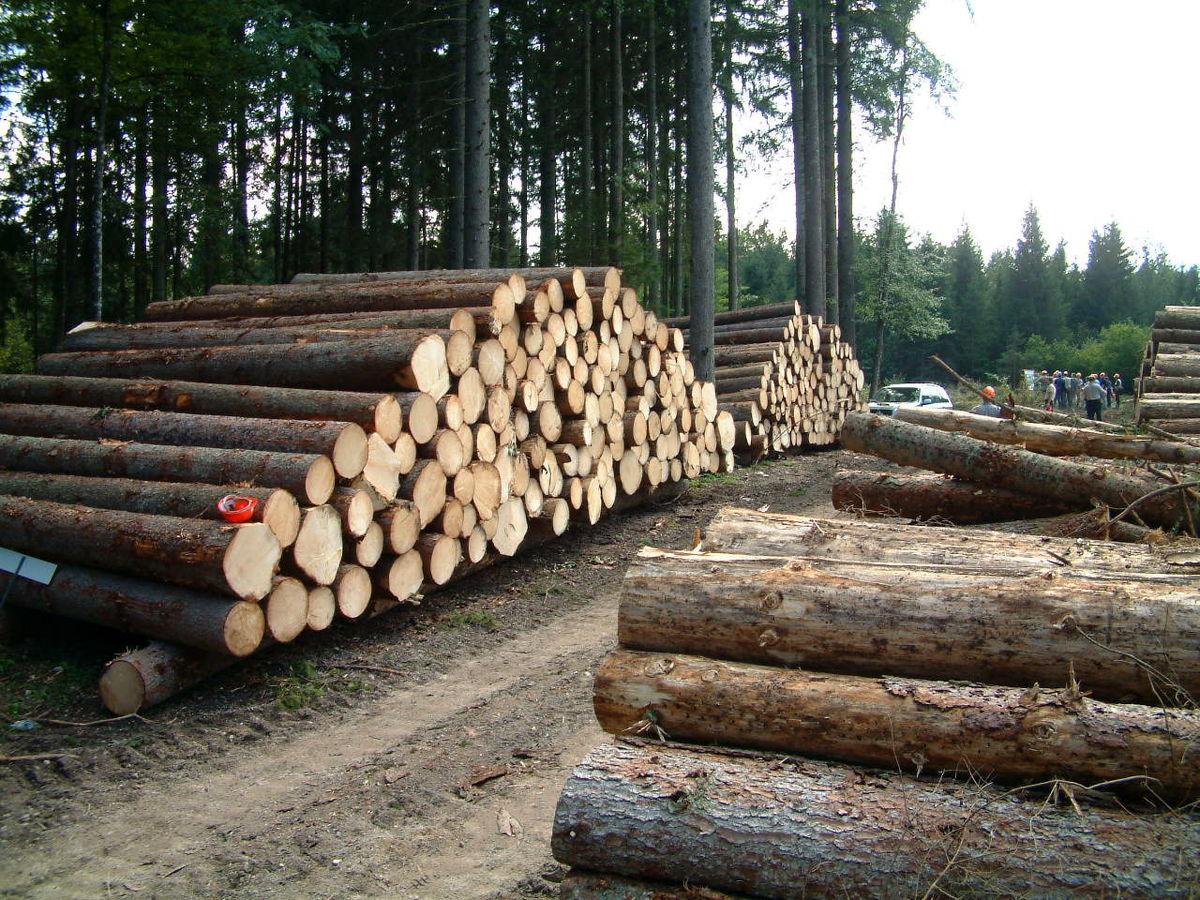 افزایش ۴هزار برابری عوارض قطع درخت