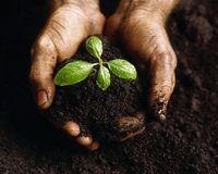 اولویت با کودهای کشاورزی تولید داخل است یا واردات؟